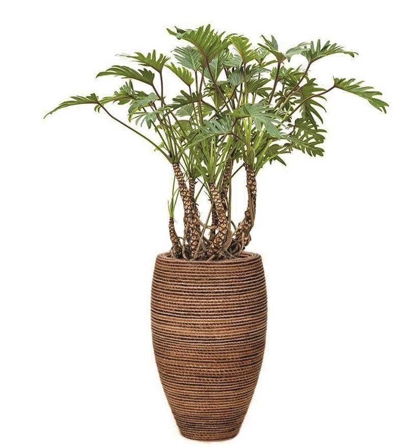 Diverse planten uit het assortiment