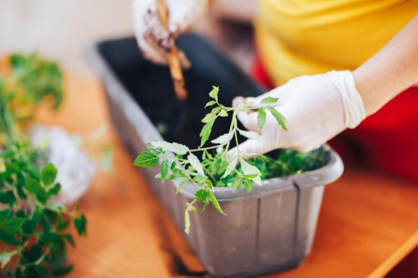 Juist nu kweek je zelf je eigen groenten en kruiden