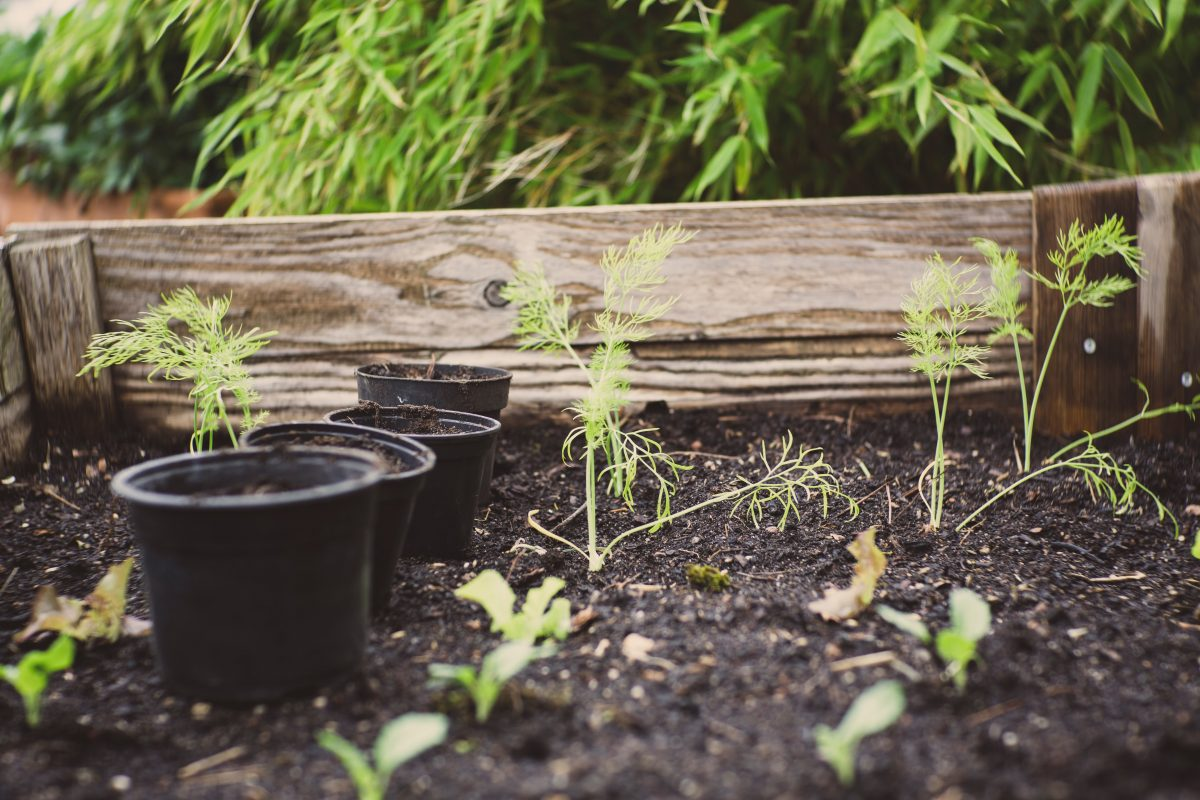 Alles voor de tuin vinden